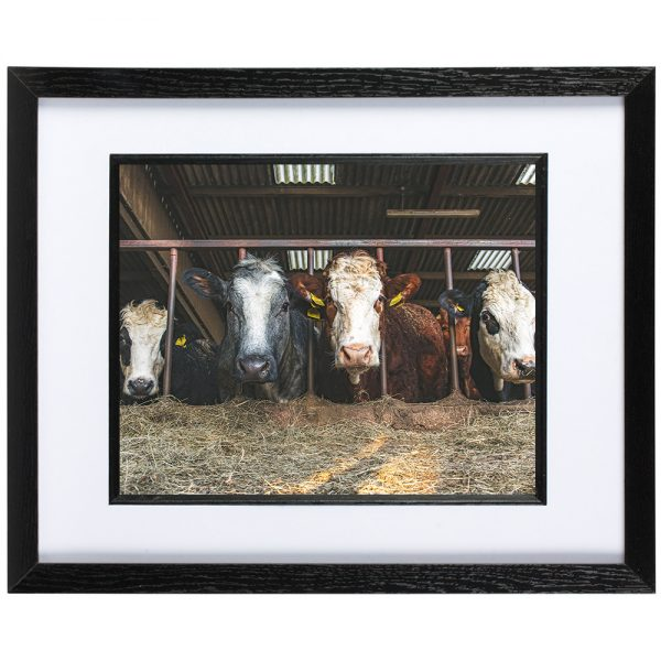 Mounted Frame - Whats For Lunch